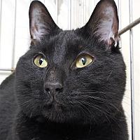 Adopt A Pet :: Jackson - Carmel, NY