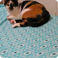Adopt A Pet :: Kali - Victor, NY