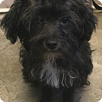 Adopt A Pet :: Chulito - ADOPTED - Decatur, GA