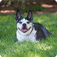 Adopt A Pet :: Spencer - Washoe Valley, NV