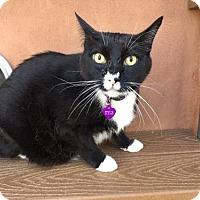 Adopt A Pet :: Kyle - Santa Fe, NM