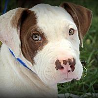 Adopt A Pet :: Jiffy - Southbury, CT