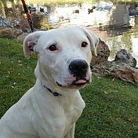 Adopt A Pet :: Dovelynn - Salt Lake City, UT