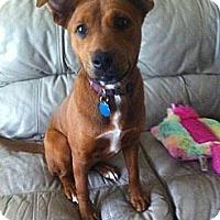 Adopt A Pet :: Nala - Silver Lake, WI