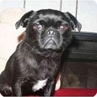 Adopt A Pet :: Rosie - Arlington, TX