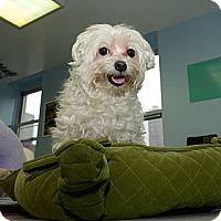 Adopt A Pet :: Kingston - New York, NY
