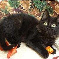 Adopt A Pet :: Aston - Mobile, AL