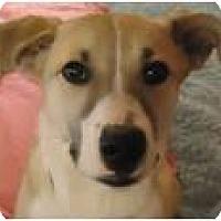 Adopt A Pet :: Blossom - Beachwood, OH