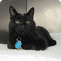 Adopt A Pet :: Marbie - Laguna Woods, CA