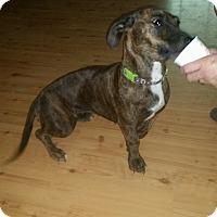 Adopt A Pet :: Bralie - Albemarle, NC