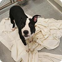 Adopt A Pet :: WILSON - Sandusky, OH