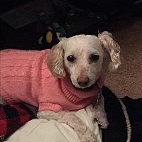 "Adopt A Pet :: ""LeLe"" Kaleah-Courtesy Post - Encino, CA"