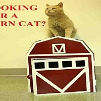 Adopt A Pet :: BARN CATS! - Boston, MA