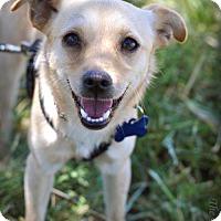 Adopt A Pet :: Jackie - Milpitas, CA