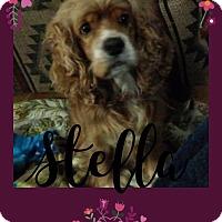 Adopt A Pet :: Stella - Santa Barbara, CA