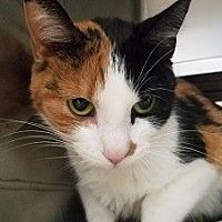 Adopt A Pet :: Little Lady - Canon City, CO