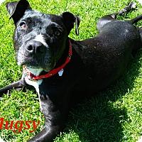 Adopt A Pet :: Mugsy - El Cajon, CA