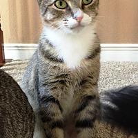 Adopt A Pet :: Whitefoot - Orange, CA