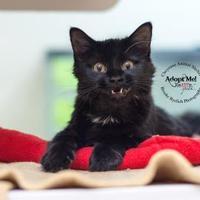 Adopt A Pet :: Lotus - Cheyenne, WY
