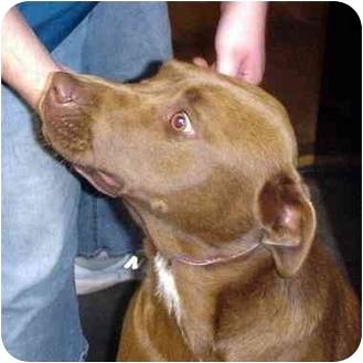 Labrador Retriever Mix Dog for adoption in Manassas, Virginia - Dragon Fly