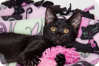 Domestic Shorthair Cat for adoption in Tustin, California - Lucky
