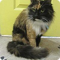 Adopt A Pet :: Cinnamon - Mobile, AL