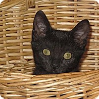 Adopt A Pet :: MaryAnn - Port Republic, MD