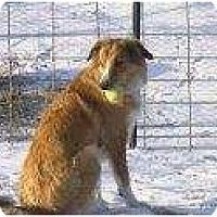 Adopt A Pet :: Mae - Alliance, NE