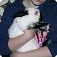 Adopt A Pet :: Manny - Maple Shade, NJ