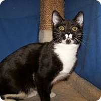 Adopt A Pet :: K-Ts5-Talulah (Luna) - Colorado Springs, CO