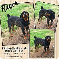 Adopt A Pet :: Ruger - Ponca City, OK