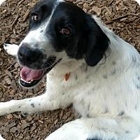 Adopt A Pet :: Mya - Baltimore, MD