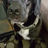 Adopt A Pet :: Brando - Whitehall, PA