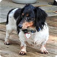 Adopt A Pet :: Jack #11 in PA - Columbia, TN