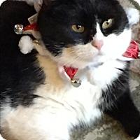 Adopt A Pet :: Tucker - Lebanon, PA