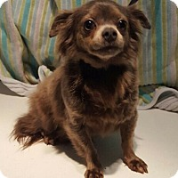 Adopt A Pet :: Gypsy - Overland Park, KS