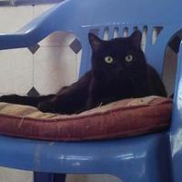 Adopt A Pet :: Fancy - Las Cruces, NM
