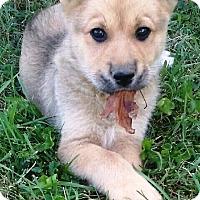 Adopt A Pet :: I'M ADOPTED Eli - Oswego, IL