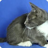 Adopt A Pet :: Gizmo - Winston-Salem, NC