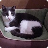 Adopt A Pet :: Hilton (SLK) 3.5.14 - Orlando, FL