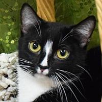 Adopt A Pet :: Daquiri - Huntley, IL