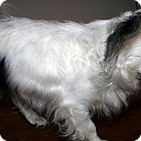 Adopt A Pet :: Scooter - Toronto, ON