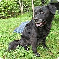 Adopt A Pet :: Rivannah - Richmond, VA