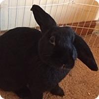 Adopt A Pet :: Blanche - Maple Shade, NJ