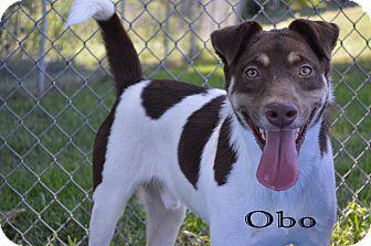 Pit Bull Terrier/Terrier (Unknown Type, Medium) Mix Dog for adoption in Texarkana, Arkansas - Obo