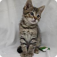 Adopt A Pet :: Mr. Freeby - Redondo Beach, CA