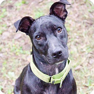 Terrier (Unknown Type, Medium)/Retriever (Unknown Type) Mix Dog for adoption in Houston, Texas - Baker