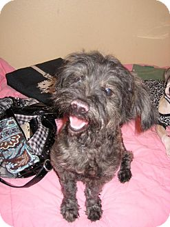 Terrier (Unknown Type, Medium) Mix Dog for adoption in DeLand, Florida - Shaggy