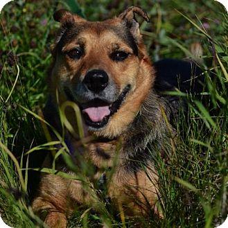 German Shepherd Dog Mix Dog for adoption in Edmonton, Alberta - Mieka