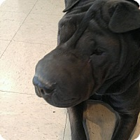 Adopt A Pet :: Dee Dee - Apple Valley, CA